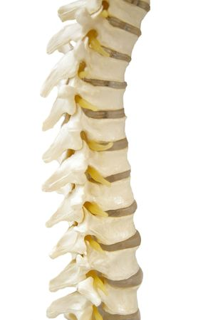 spinal column chiropractic